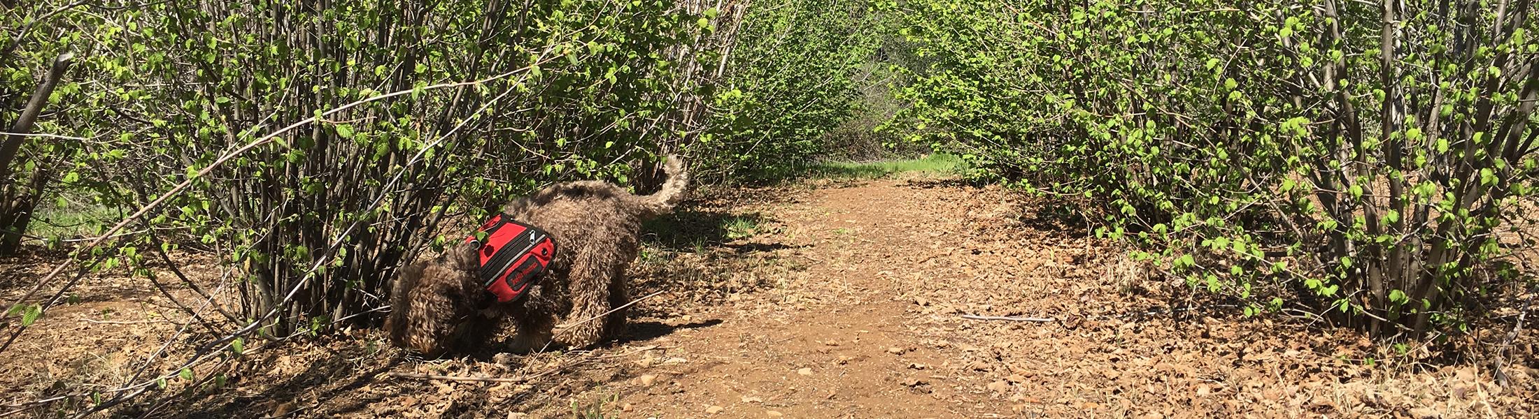 Cal Truffle Farm Tesoro Mio