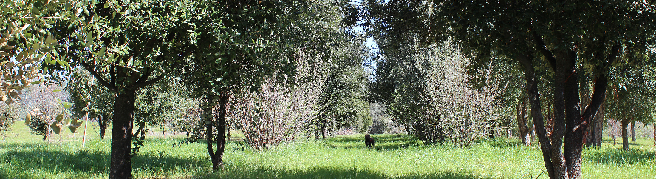 Tesoro Mio (Treasure of mine) is a producing truffle farm