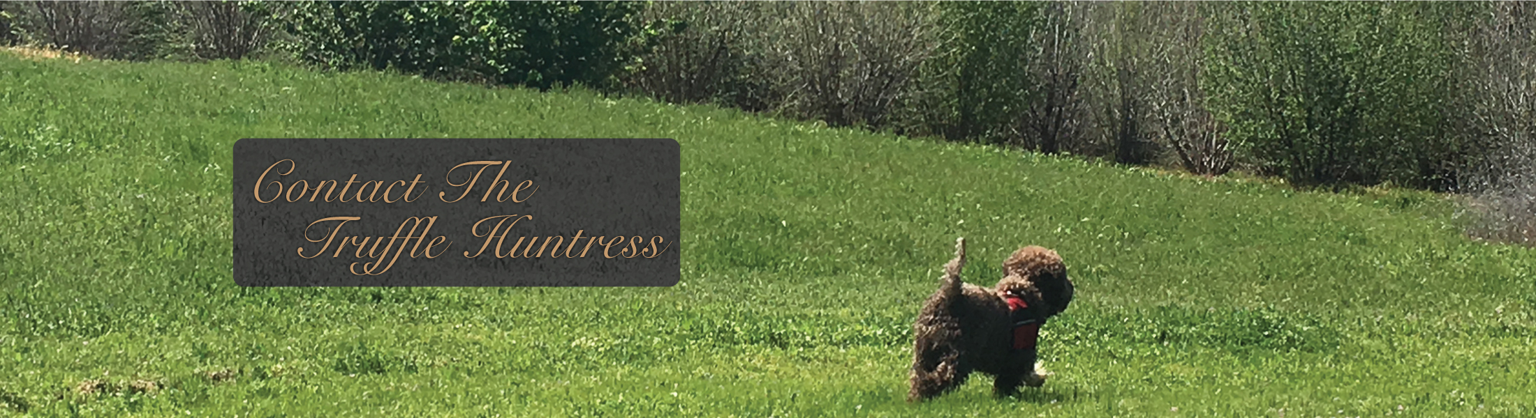 About The Truffle Huntress